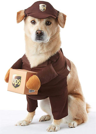 upsdog.jpg