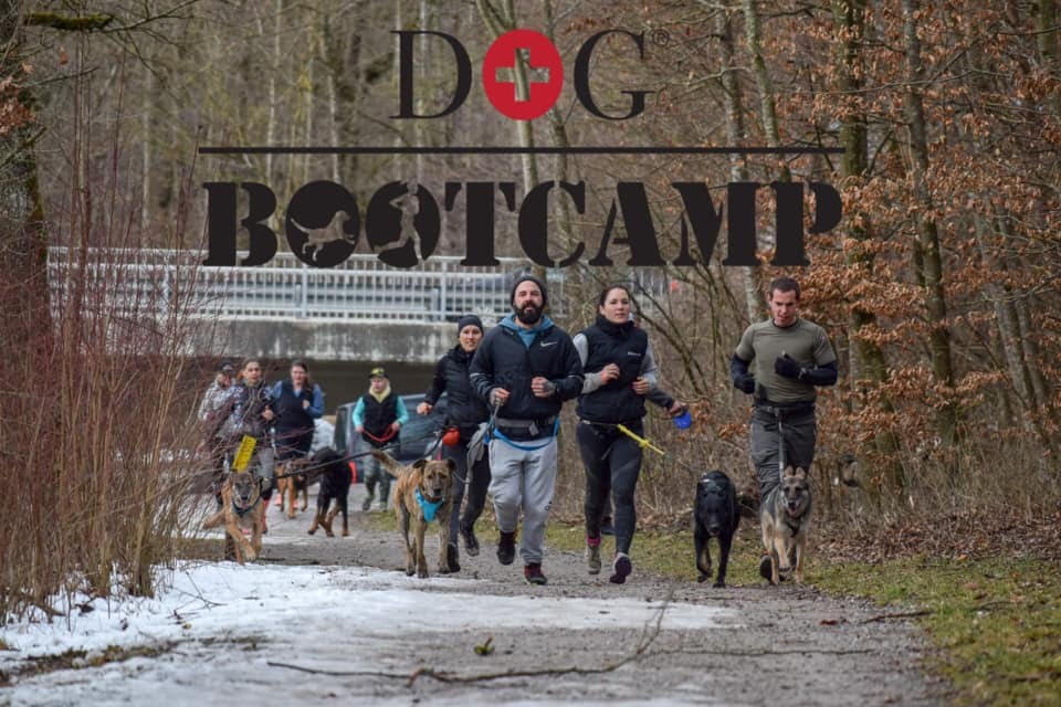 Privattraining DogBootcamp Zürich