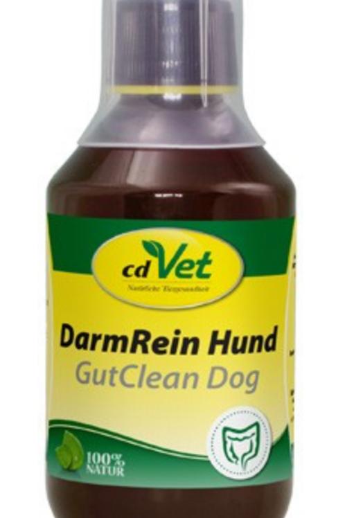 DarmRein Hund