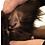 Thumbnail: ZeckEx SpotOn
