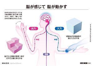 脳 ストレス 情報処理