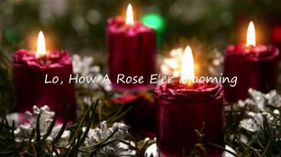 Lo' How a Rose Er Blooming