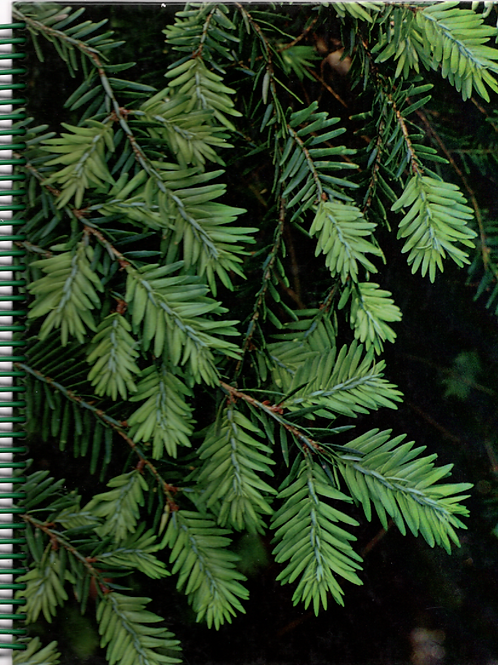 Evergreens Book Journal