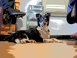 Miles the Shop Dog
