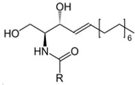 cocochoco ceramide formula
