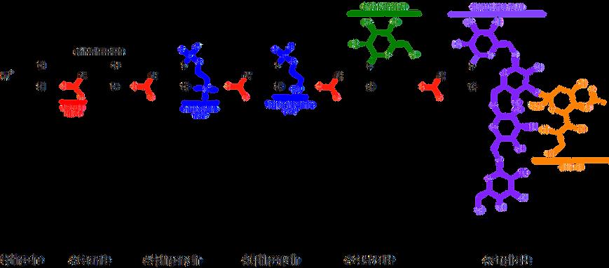 cocochoco_ceramide_formula