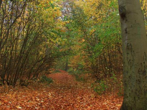 Waldspaziergang / Forest walk
