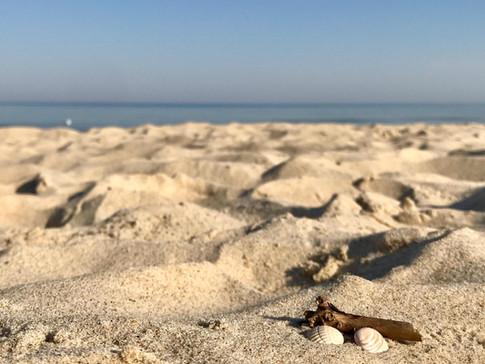 Strandmuschel / Beach shell