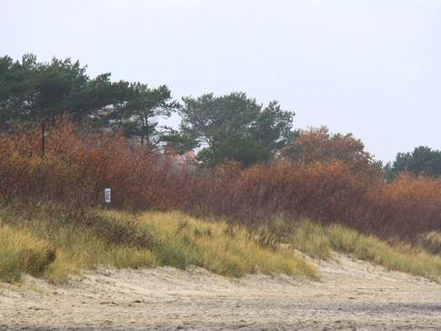 Herbst am Strand / Fall at the beach