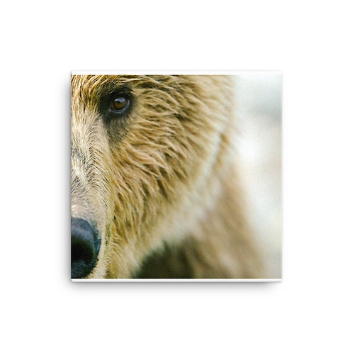 Brown Bear on Canvas by Casey Anderson