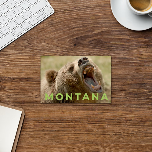 Montana Grizzly Growl - 4 x 6 Post card