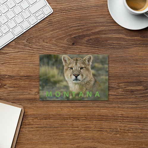 Mountain Lion by Casey Anderson - 4 x 6 Post Card
