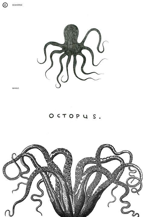 NewOctopusR.jpg