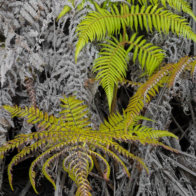 37. New Ferns by Roy Money