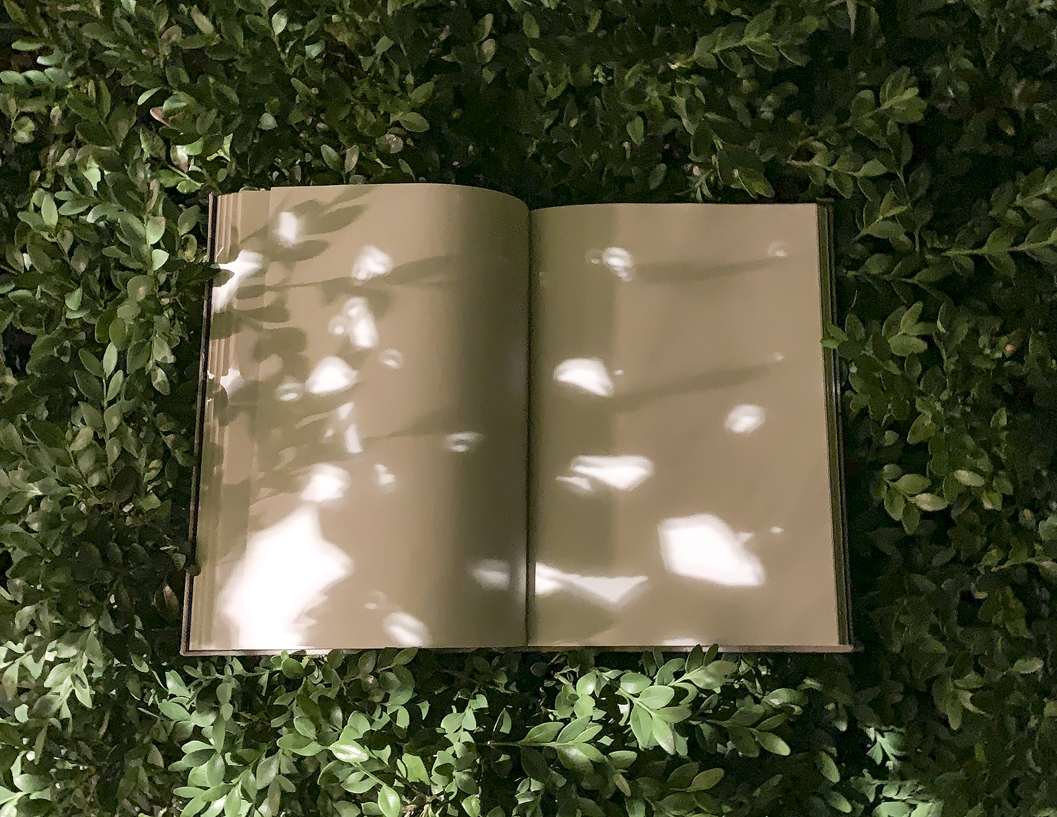 Honorable Mention - Open Book, Mystery
