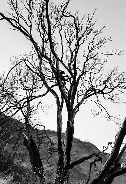 Honorable Mention, Photography - Whiskeytown, June Aarsen
