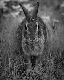 Curious Creature - Matthew Johnson
