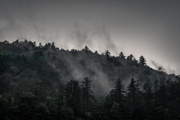 Misty Trees - Matthew Johnson