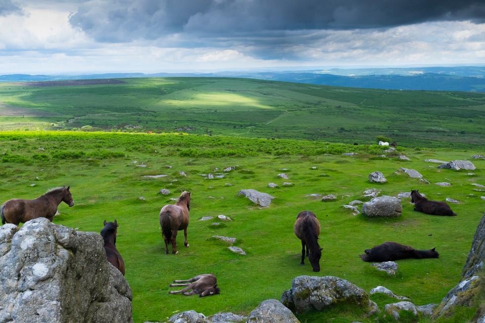 Wild Horses of Dartmoor - Hank Paper
