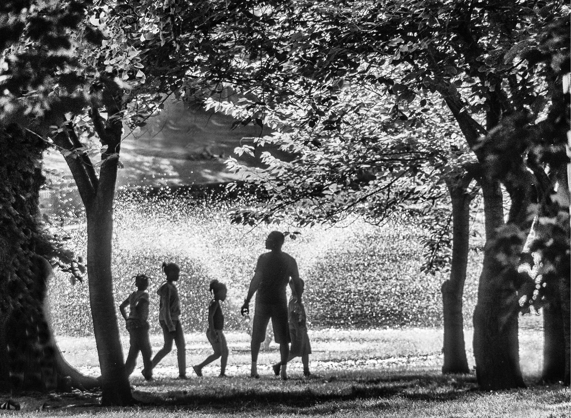 Honorable Mention - A Stroll in the Park