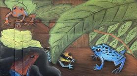 Poison Dart Frogs Pastel Art - Tenzin Sermo