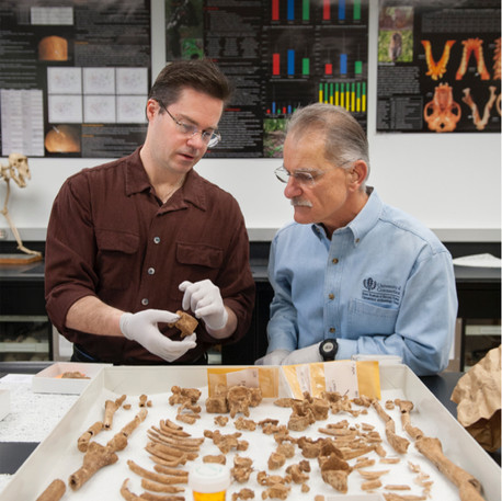 Secrets of Bones from New Haven Green to be Divulged at New Haven Museum