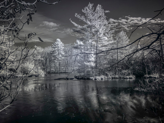 Evergreen Island - Robert Thomas