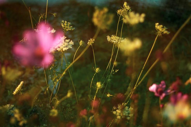 Il Giardino No. 1 - Elizabeth West