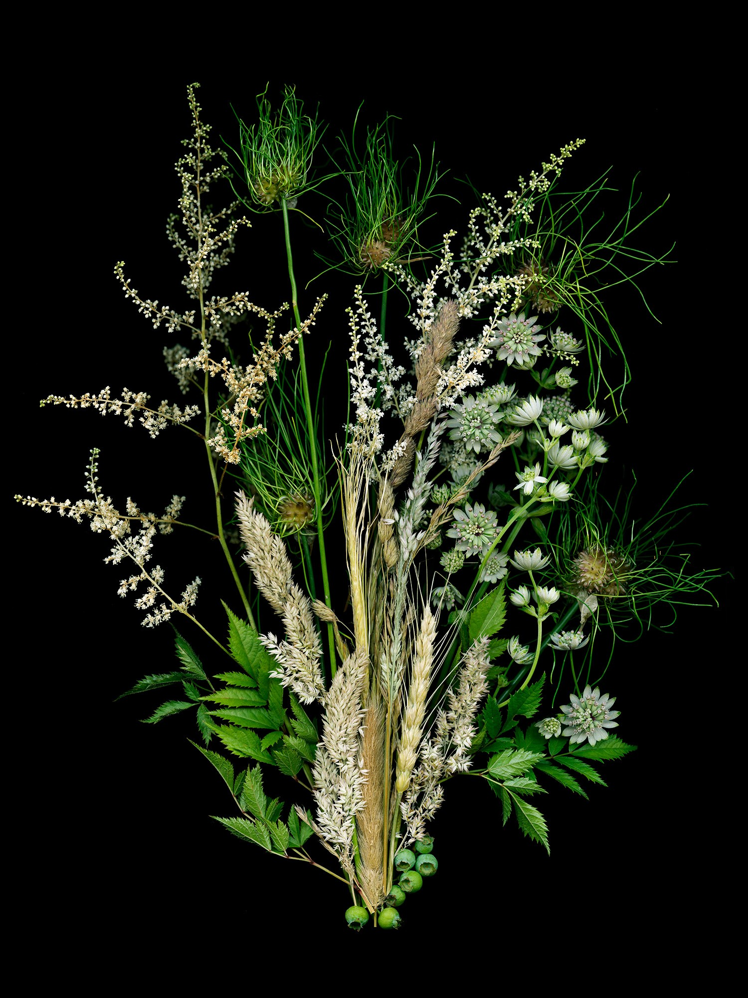 Honorable Mention - Grasses and Astilbe
