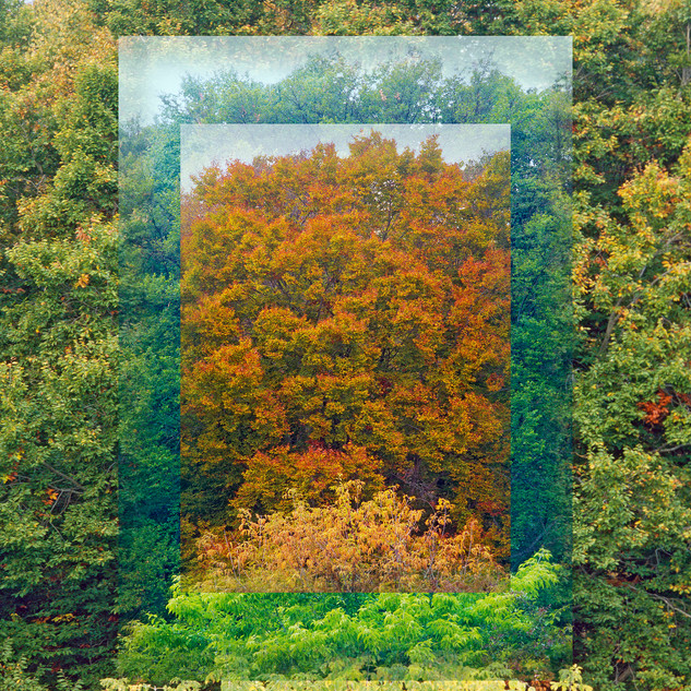 34. Conn College Arbo 5: Two Tree Tops, Oct 14, May 31, Oct 26 by Mark Mathew Braunstein