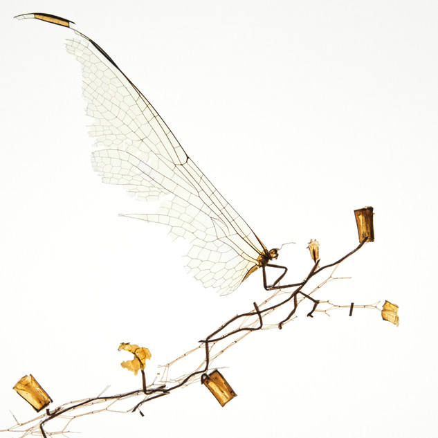 1. Flutterby Dragonfly Deconstruction-Reconstruction Series by Debbie Smith