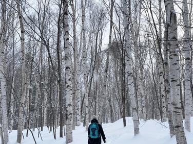 白樺林の雪山へ。