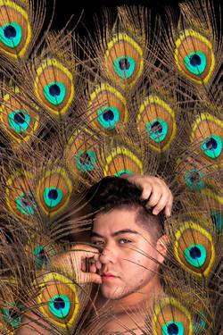 peacockweb