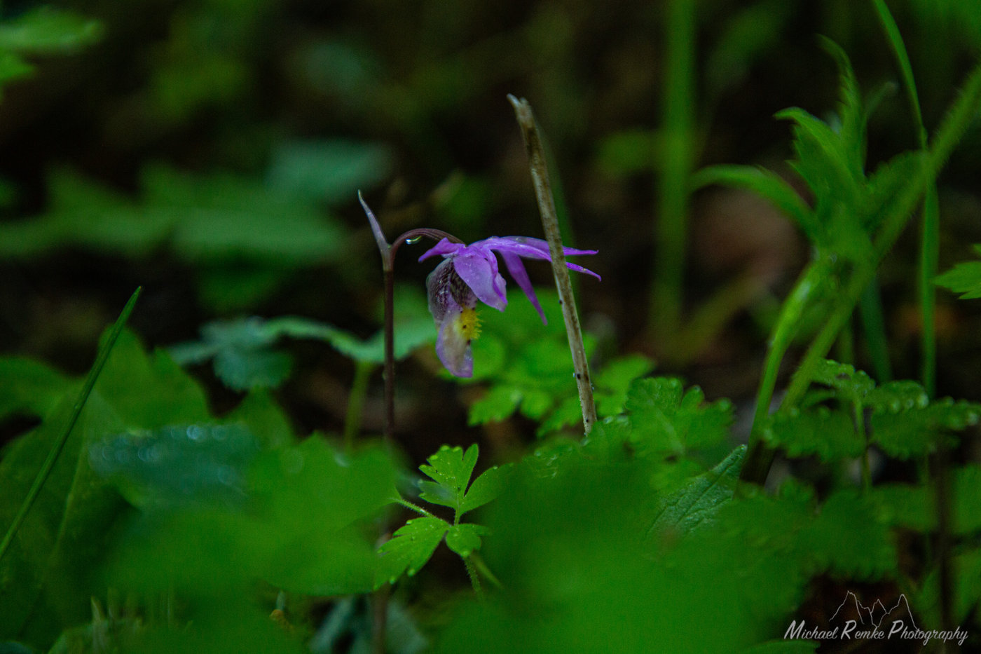 pagckflowers-4.JPG