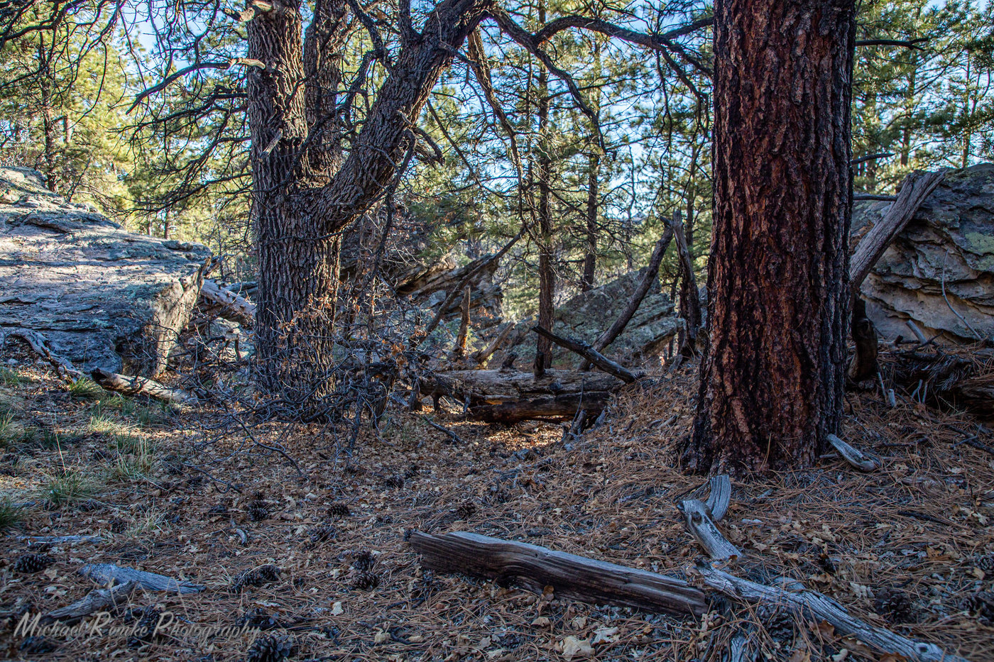 oak_pine.jpg
