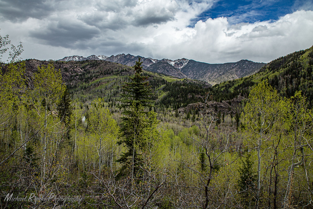 Green aspen and high mountains still covered in snow.