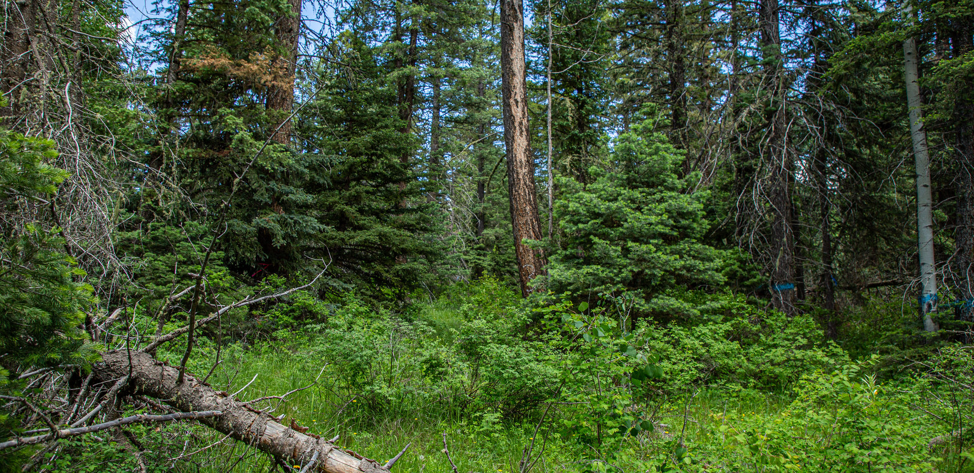 pagforests-8.JPG