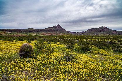 flowerfield3.jpg