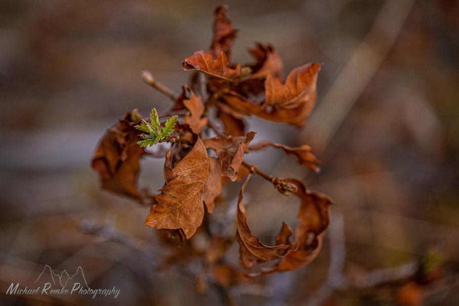 oakspring-2.jpg