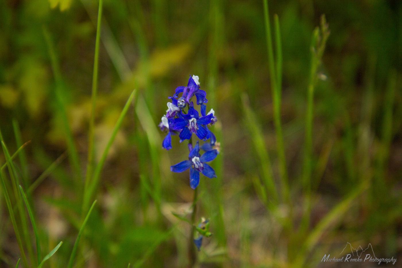 pagckflowers.JPG