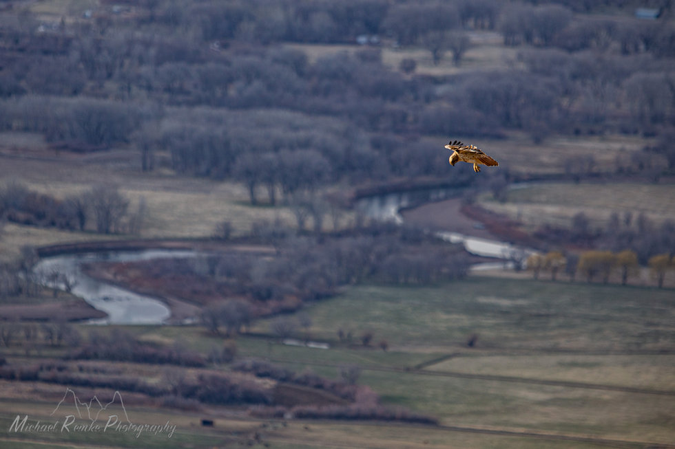redtailhawk.jpg