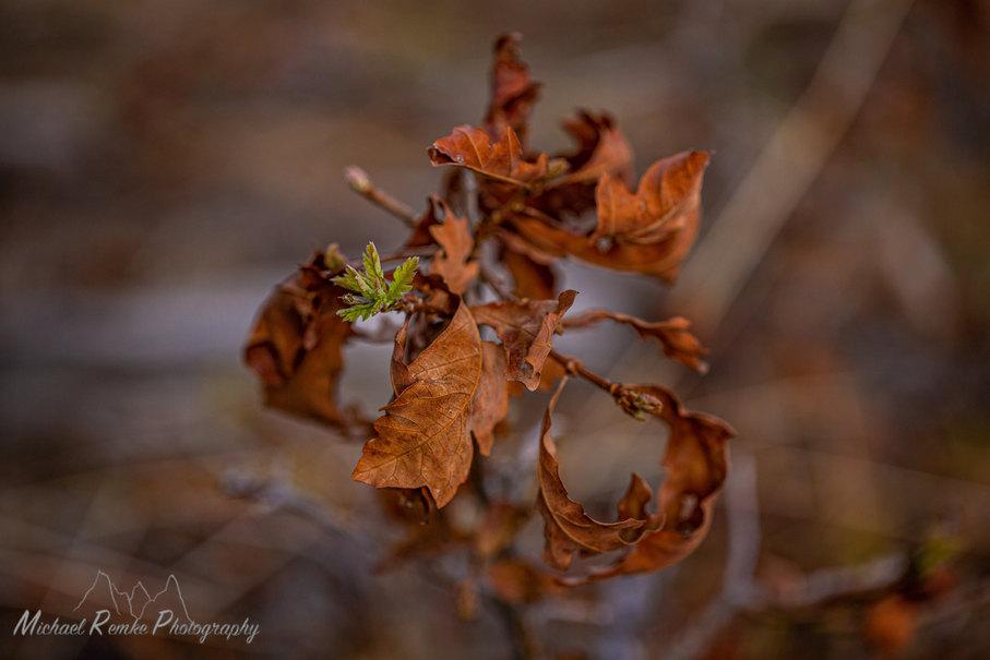 oakspring.jpg