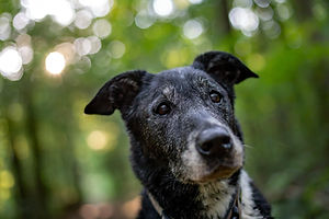 closeup-shot-old-dog-with-blurred-backgr