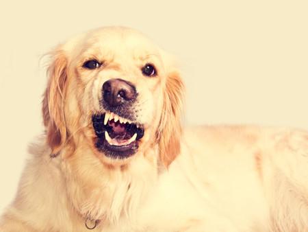 Cómo detectar un perro estresado