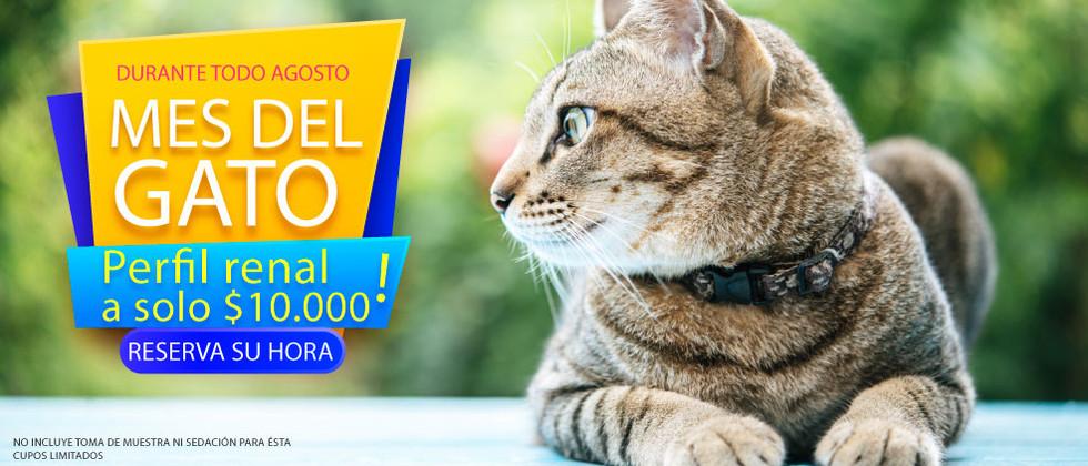 Carrusel-Mes-del-gato.jpg