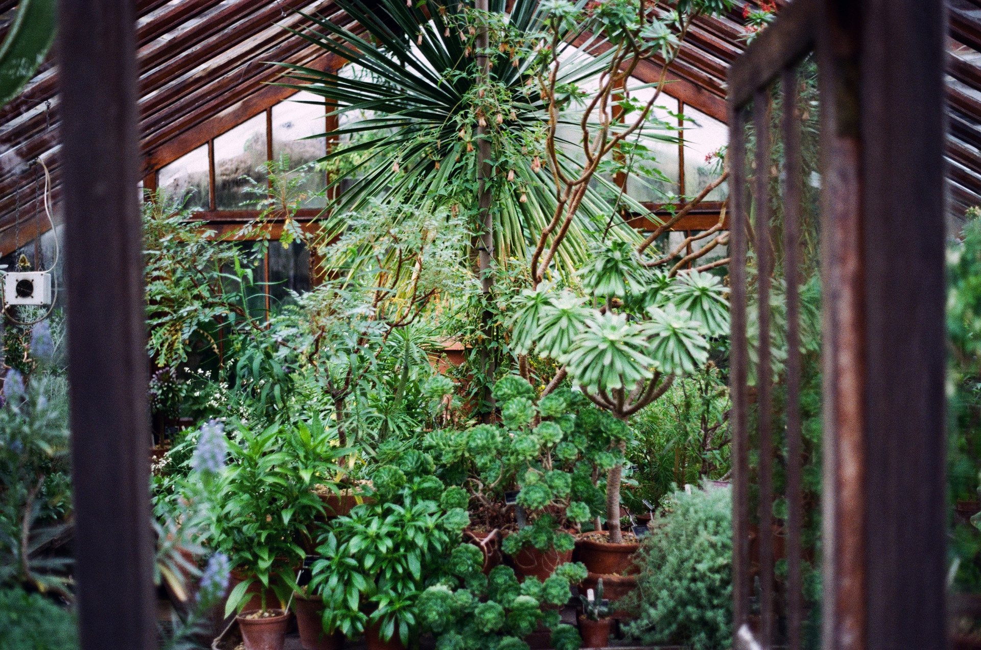 Chelsea Physic Garden, 2018