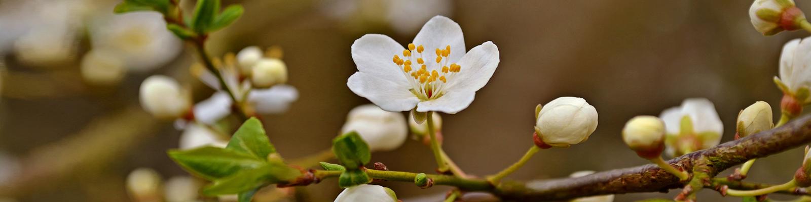 blossom slider