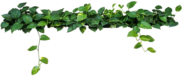 check-the-vine-pothos-plants_edited.png