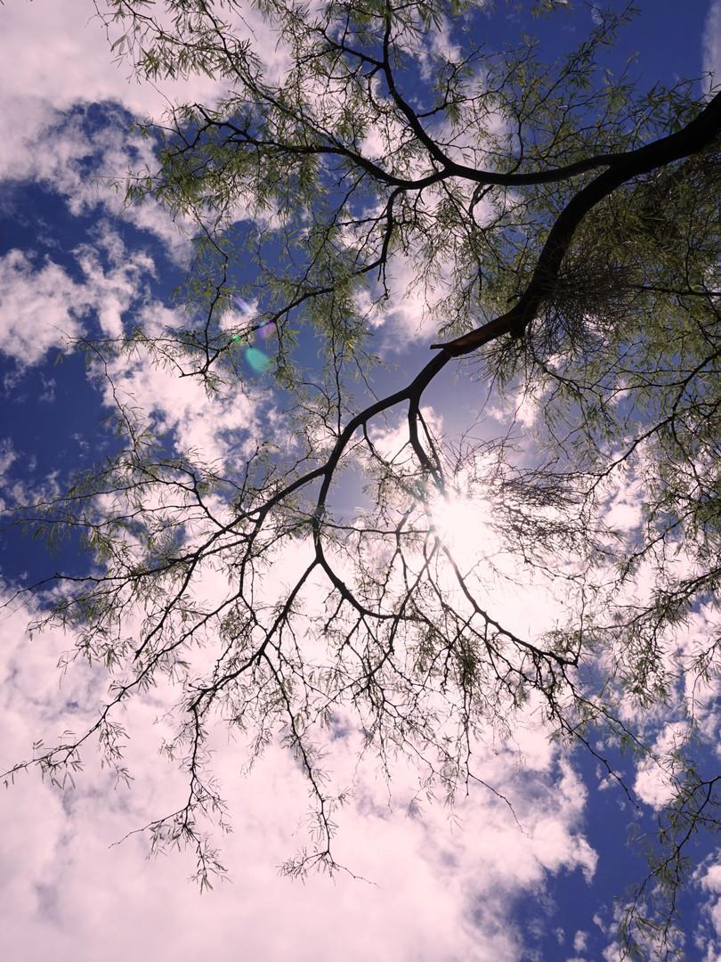 IA-PIC 1.jpg