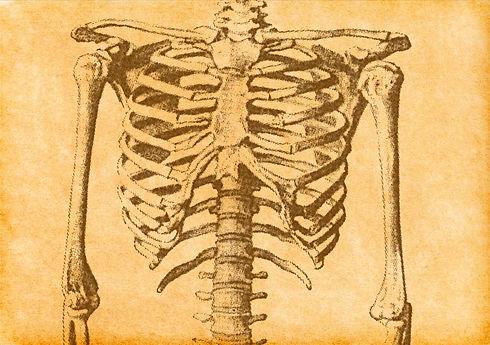 Human%20Skeleton%20Sketch_edited.jpg